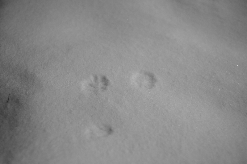 2009-03-25-tracking