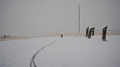 morning blizzard ride - 1