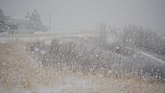 morning blizzard ride - 2