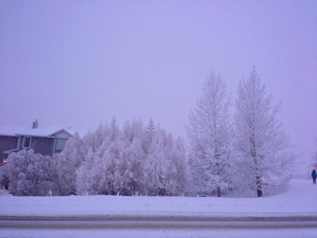morning snow walk