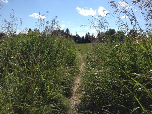 Overgrown pathway